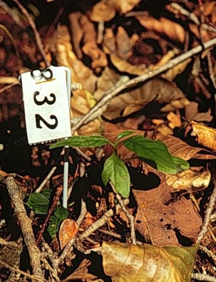14. Masaki,T. & T Nakashizuka. 2002. Seedling demography of ...